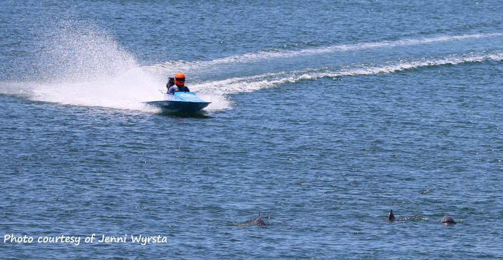 A speed boat dangerously close to dolphins surfacing for a breath. Photo courtesy of Jenni Wyrsta